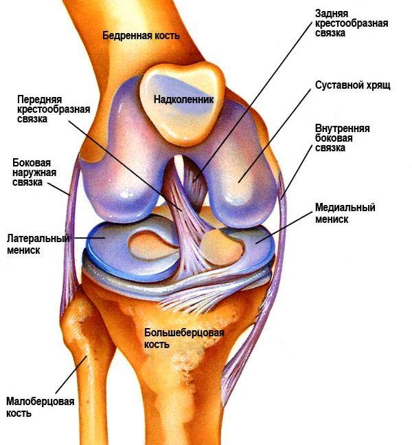 Суставы таза человека видео лекция боль в суставах ног при ходьбе у детей